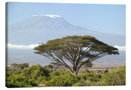 Canvas print  Big tree in front of the Kilimanjaro - Joe & Mary Ann McDonald