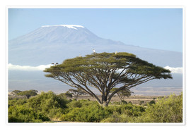 Premium poster  Baobab tree in savannah with views of Mount Kilimanjaro - Joe & Mary Ann McDonald