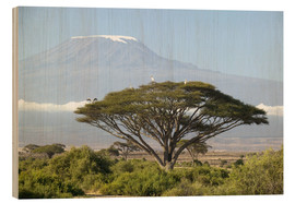 Wood print  Big tree in front of the Kilimanjaro - Joe & Mary Ann McDonald