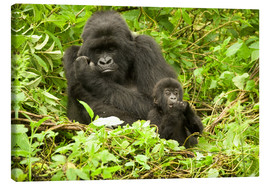 Canvas  Eastern Gorilla with baby between leaves - Joe & Mary Ann McDonald