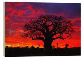 Wood  African baobab tree at sunset - Adam Jones