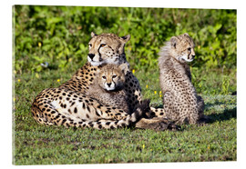 Acrylic print  Cheetah mother and babies - Ralph H. Bendjebar