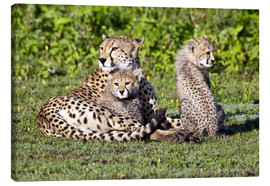 Canvas print  Cheetah mother and babies - Ralph H. Bendjebar