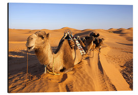 Aluminium print  Saddled camels in the desert - Walter Bibikow