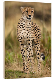 Wood print  Cheetah on the prowl - Joe & Mary Ann McDonald