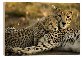 Wood print  Cheetah cub with mother - Joe & Mary Ann McDonald