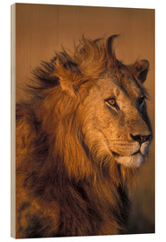Wood  Adult Male Lion - Paul Souders