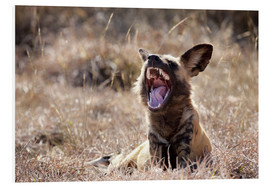 Foam board print  Yawning wild dog - Wendy Kaveney