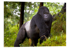 Foam board print  Mountain gorilla on a foray - Ralph H. Bendjebar