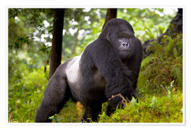 Premium poster  Mountain gorilla on a foray - Ralph H. Bendjebar