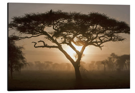 Aluminium print  Acacia tree at sunrise - Ralph H. Bendjebar