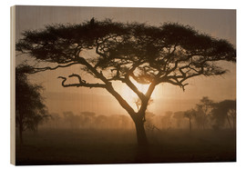 Wood print  Acacia tree at sunrise - Ralph H. Bendjebar