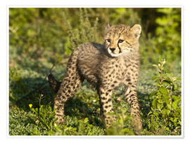Premium poster Little cheetah in the green