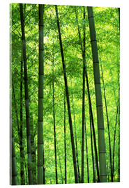 Acrylic glass  Tree trunks in a bamboo forest - Keren Su