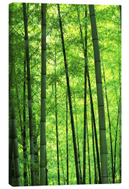 Canvas  Tree trunks in a bamboo forest - Keren Su