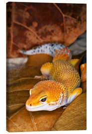 Canvas  Leopard gecko lying between leaves - Adam Jones