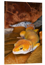 Adam Jones - Leopard gecko lying between leaves