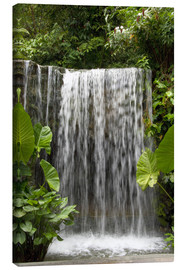 Canvas print  Waterfall in the orchid garden - Cindy Miller Hopkins