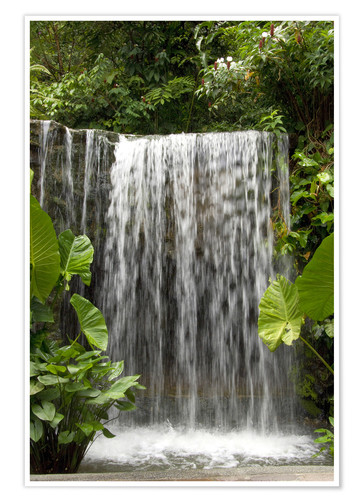 Premium poster Waterfall in the orchid garden