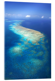 Acrylic print  Great Barrier Reef Marine Park - David Wall