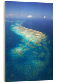 Wood print  Great Barrier Reef Marine Park - David Wall