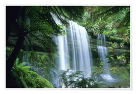 Premium poster  Russell Falls and tree ferns - Kevin Schafer