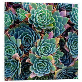 Acrylic glass  Colorful succulents - David Wall