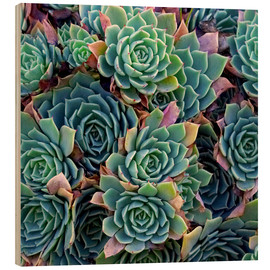 Wood  Colorful succulents - David Wall