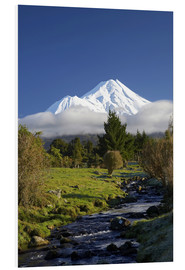 Foam board print  Nature at Mount Taranaki - David Wall
