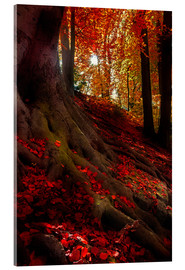 Acrylic print  autumn light - Hannes Cmarits