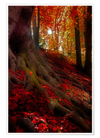 Premium poster autumn light