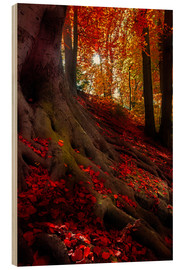 Wood print  autumn light - Hannes Cmarits