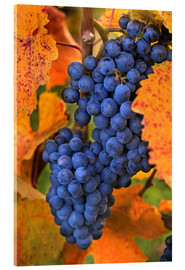 Acrylic print  Grapes in the autumn leaves - Janis Miglavs