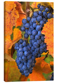 Canvas  Grapes with autumn leaves - Janis Miglavs