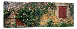 Acrylic print  Climbing roses on old stone wall - Ric Ergenbright