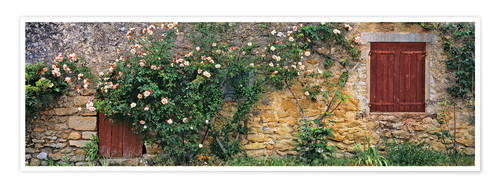 Premium poster Climbing roses on old stone wall
