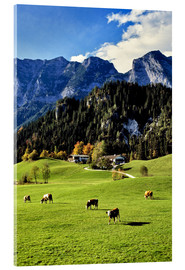Acrylic print  Alpine views with forest and pasture - Ric Ergenbright