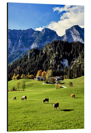 Alu-Dibond  Alpine views with forest and pasture - Ric Ergenbright