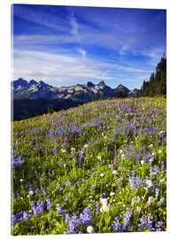 Acrylic glass  Picturesque wildflower meadow in front of Mount Rainier - Chuck Haney