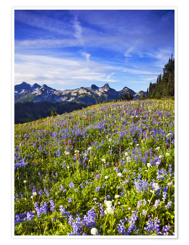 Premium poster Flower meadow in front of Mount Rainier