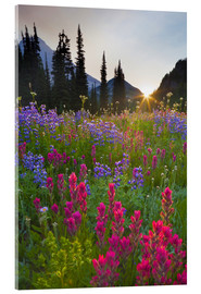Acrylic print  Flower meadow at sunrise - Gary Luhm