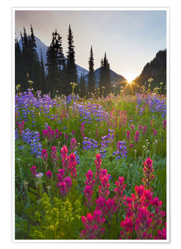 Premium poster Flower meadow at sunrise