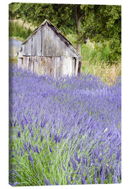 Canvas print  Lavender field and scales - Janell Davidson