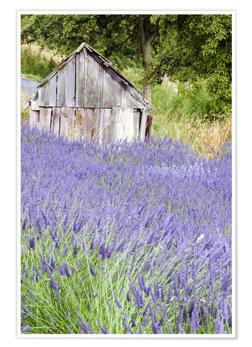 Premium poster Lavender field and scales