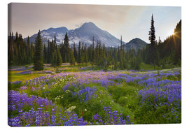 Canvas  Lupine in flower meadow at sunrise  - Gary Luhm