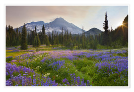 Premium poster  Lupine meadow at sunrise - Gary Luhm