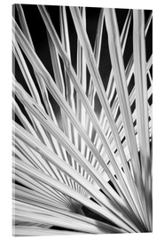 Acrylic glass  Infra Red Black & White view of palm tree fronds - Adam Jones