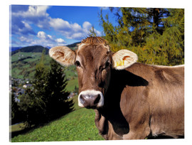Acrylic glass  Startled Swiss cow in the Dolomites - Ric Ergenbright