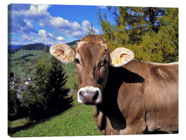 Canvas  Startled Swiss cow in the Dolomites - Ric Ergenbright