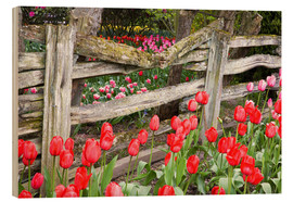 Wood print  Tulips in front of a wooden fence - Jamie & Judy Wild